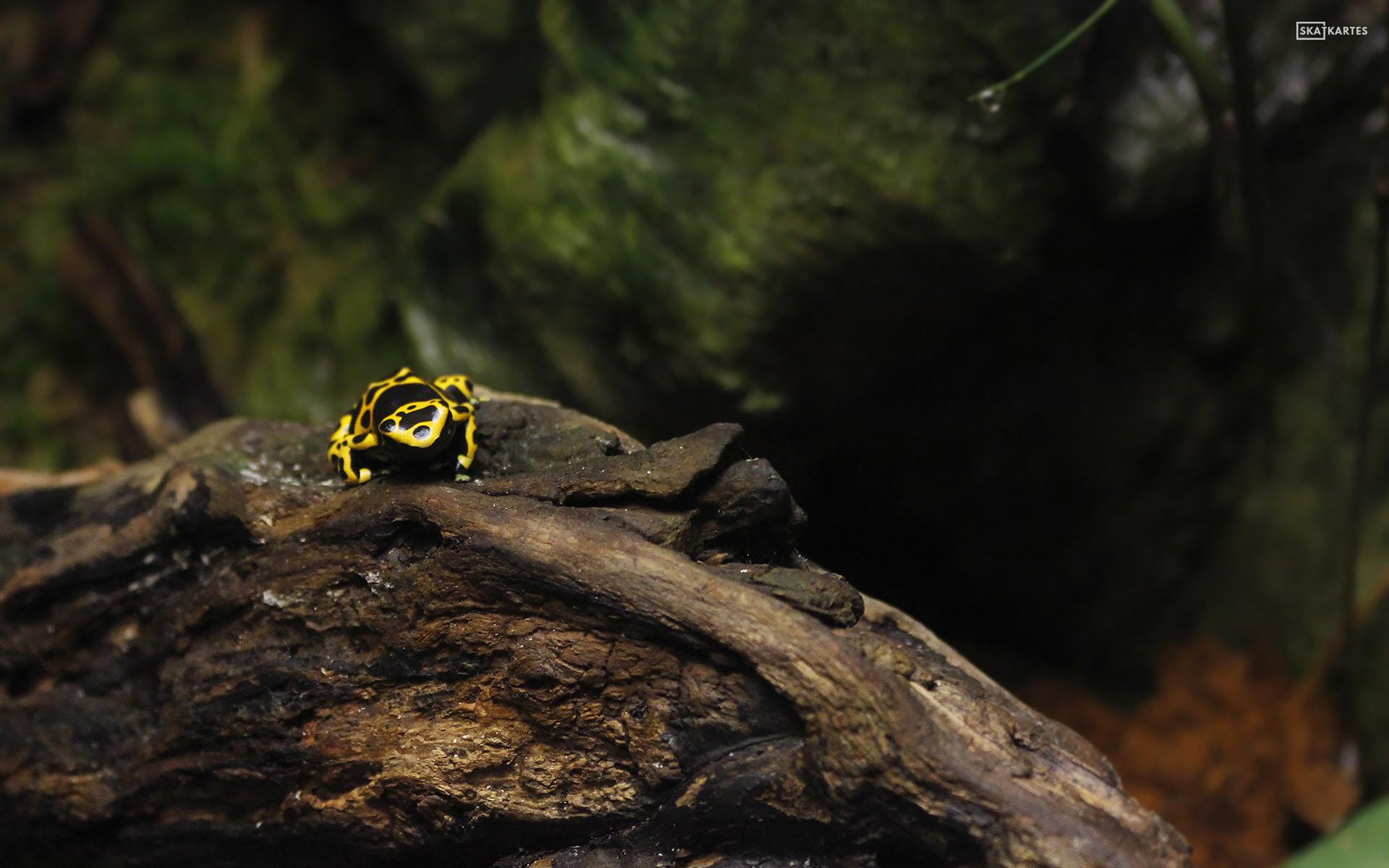 Skatkartes-Latvija-Mezaparks-Rigas-Zoo-Tropu-maja