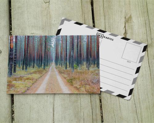 Skatkarte Nr. 1050. Vientuļais meža ceļš.