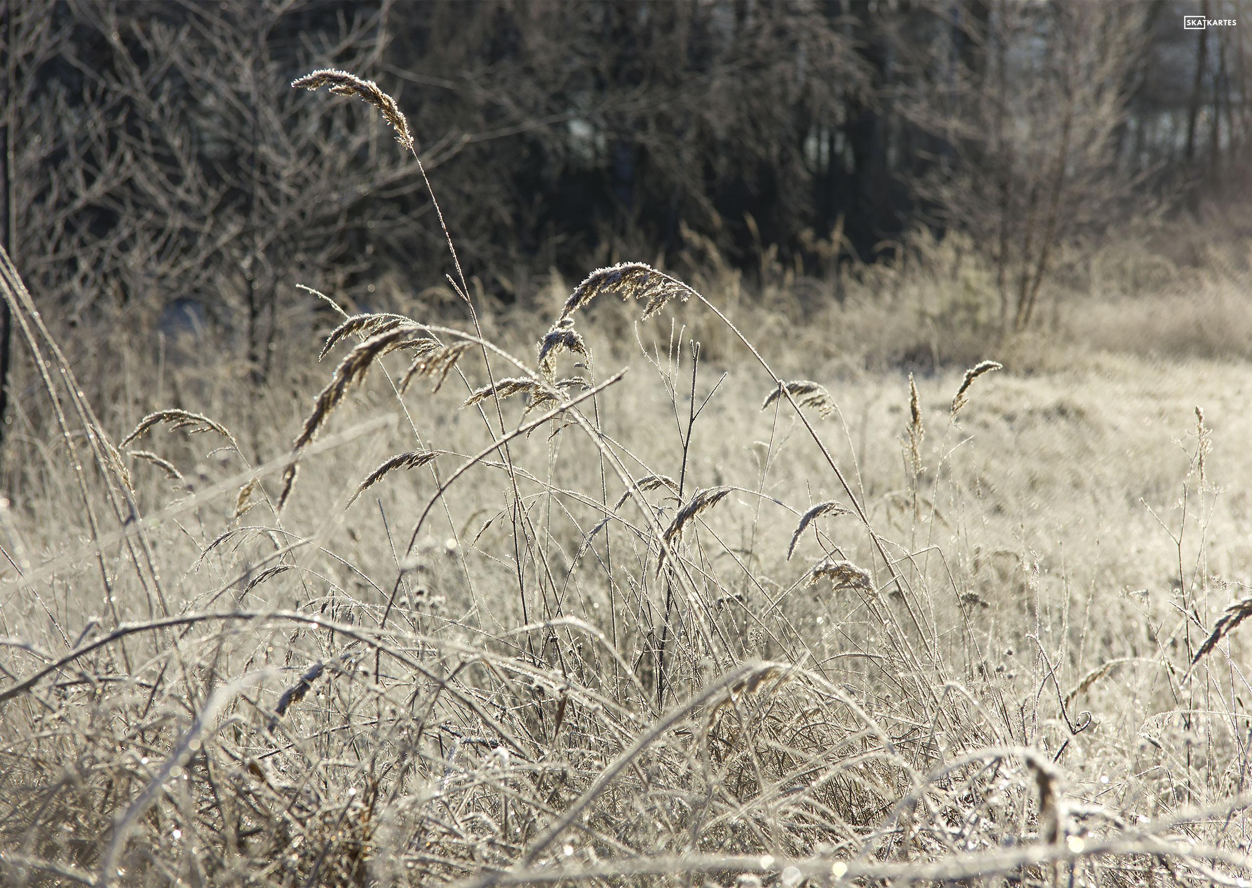 Skatkarte Nr. 1098-5 – Saules apspīdētie Garkalnes meži (2015. gada decembris).